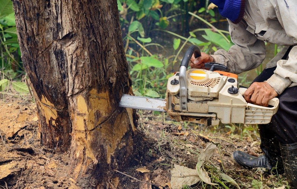 3 Reasons Why You Need a Tree Service